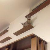 注文住宅 かっこいい工務店 岡山 アイム・コラボレーション アイムの家 施工例11 猫と共生する2階リビングの家 リビング&ダイニング 猫 キャットウォーク