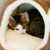 注文住宅 かっこいい工務店 京都府 福知山市 ADACHI住建 足立住建 おうち屋さん 新築 施工例5 猫 部屋